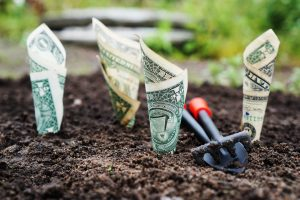 five overlooked tips for lead generation. Photo of dollar bills growing out of a garden.