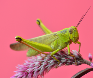 Patience, Young Grasshopper. Content Marketing is Worth the Wait_DofM Free Marketing Advice_6.1.2021